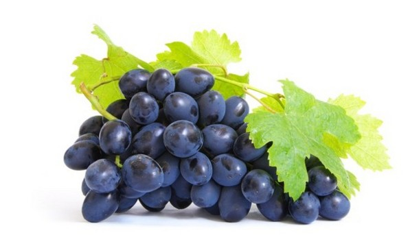 Study-finds-widespread-adulteration-of-grape-seed-extract_strict_xxl