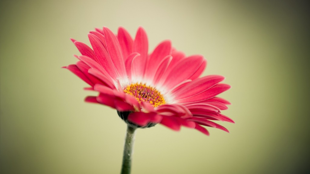 Flower-Images-and-Wallpapers3