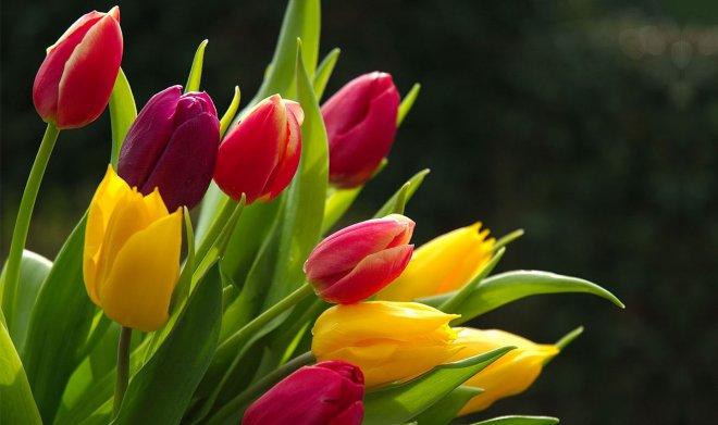 2-flower